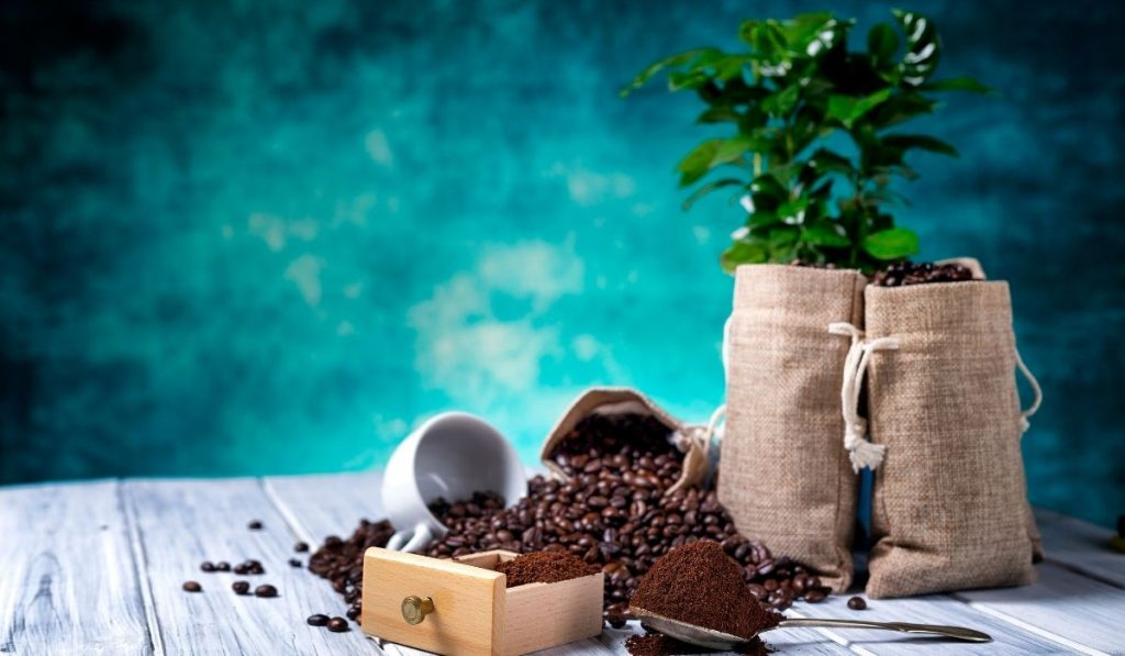 Coffee Grounds and Plant