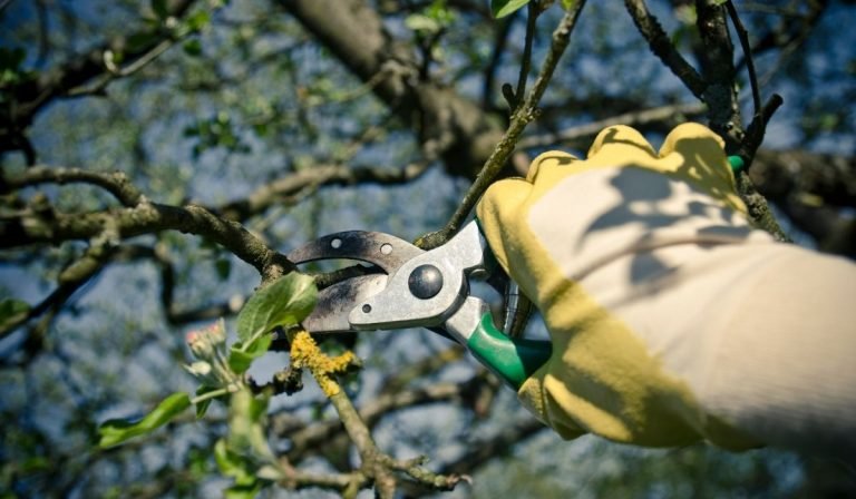 19 Tips for Pruning Your Avocado Tree