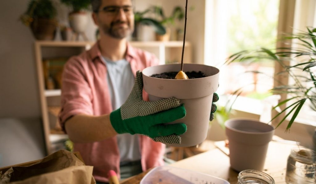man holding a pot of newly repotted avocado tree