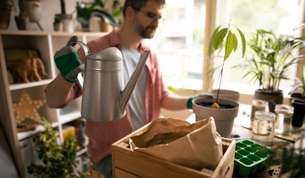 man holding a water garden jug to water the newly potted avocado tree