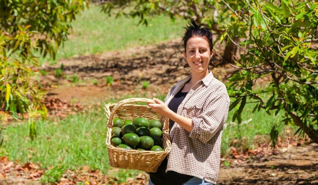 Woman Carrying Basket of Avocados