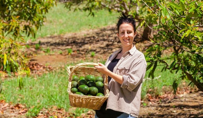 How Are Avocados Produced? 7 Facts About Commercial Avocados