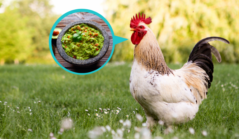 Can Chickens Eat Guacamole?