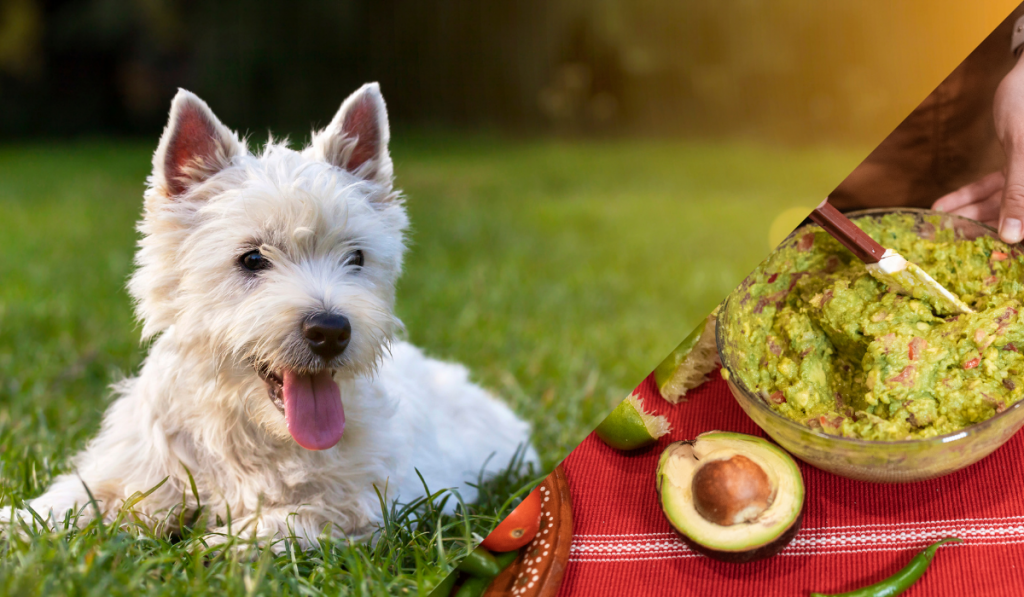 Dog sitting in the grass with a guacamole picture in the side.